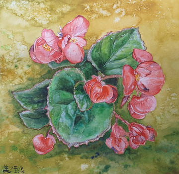 Little Flowering Begonia by MirielVinya