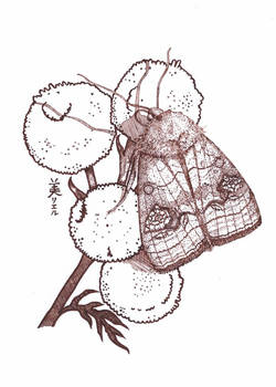 A moth and tansy, Inktober 13-2017