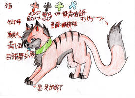 Japanese cat plan