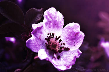 Beauty of Flowers by ShiranuiOkami