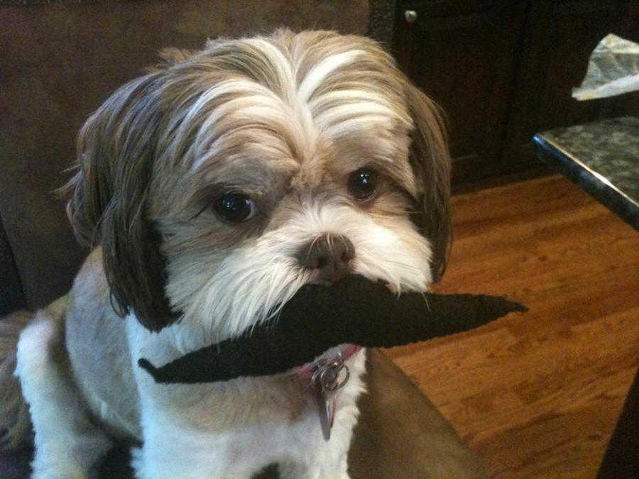 Zee Mustache  Dog by LoveYouForeverBabe