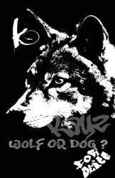 Wolf Or Dog by KayZ-NZ