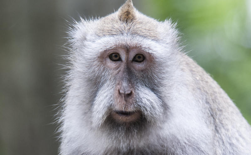 Bali Monkey Forest by zeroskyy