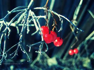 the red winter VI