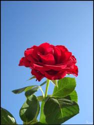 Fleurs 043