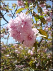 Fleurs 046