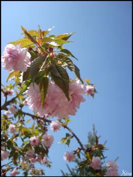 Fleurs 047
