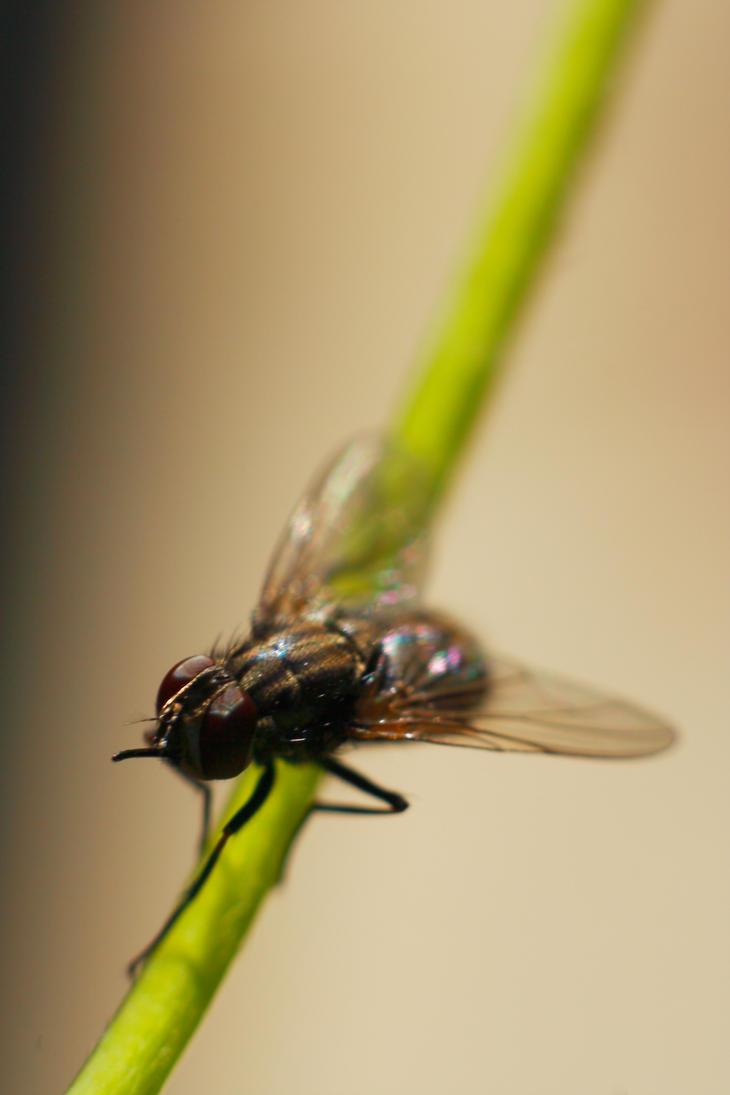 Fly III by luka567