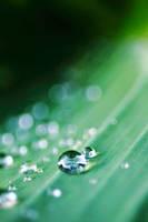 Droplets IX by luka567