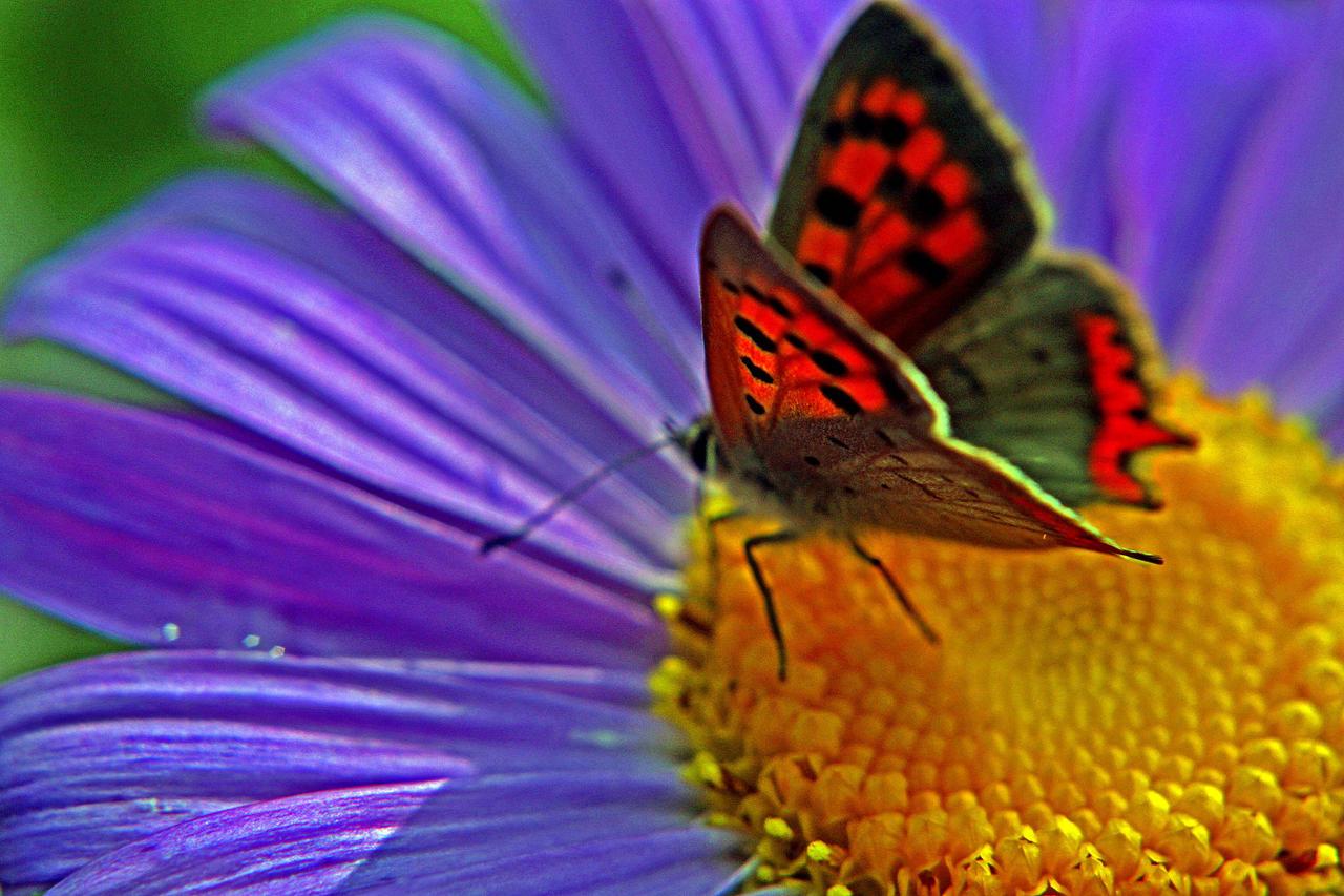 Butterfly VII by luka567