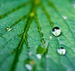 Waterdrops on a green leaf