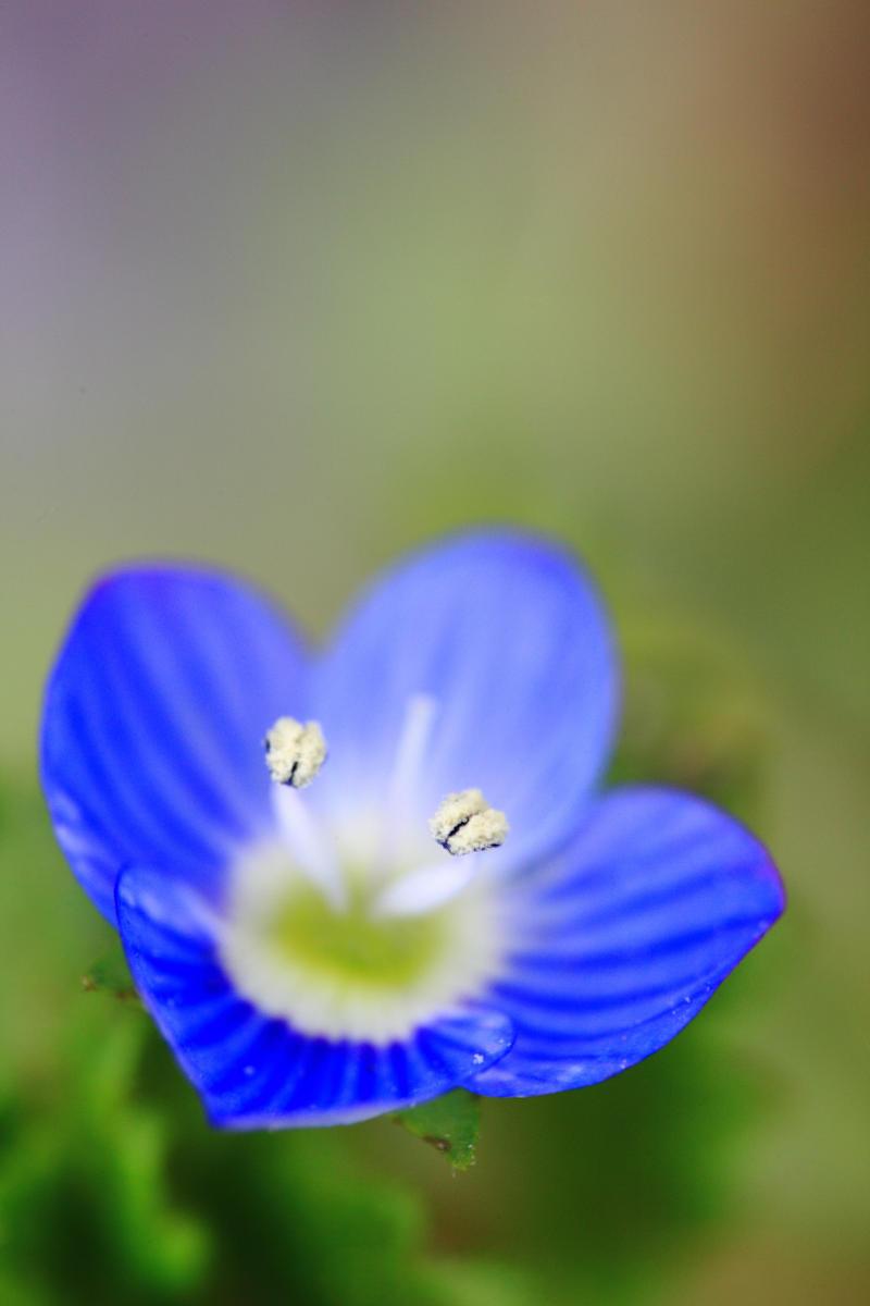 Blue flower by luka567