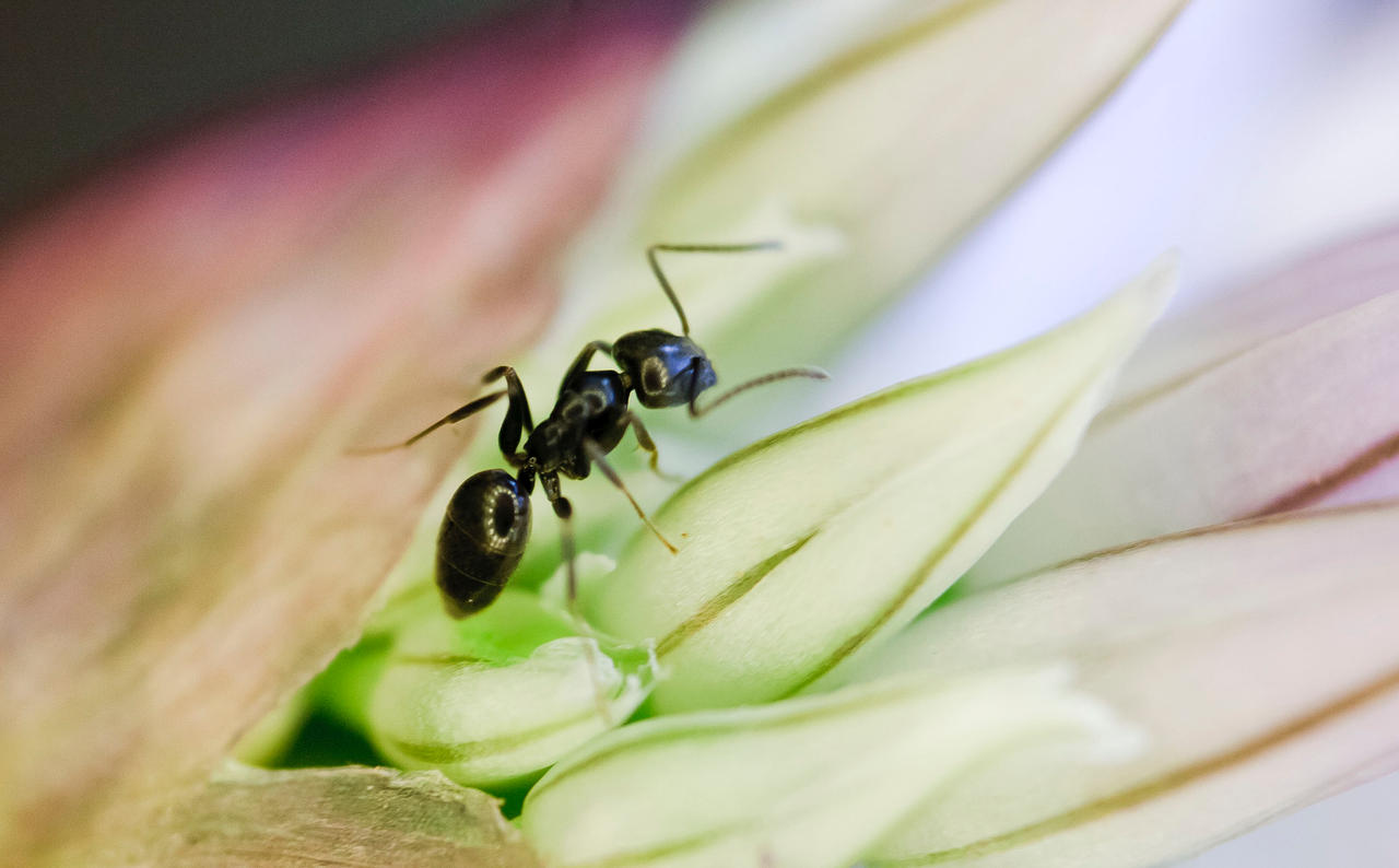 Lonesome ant II by luka567