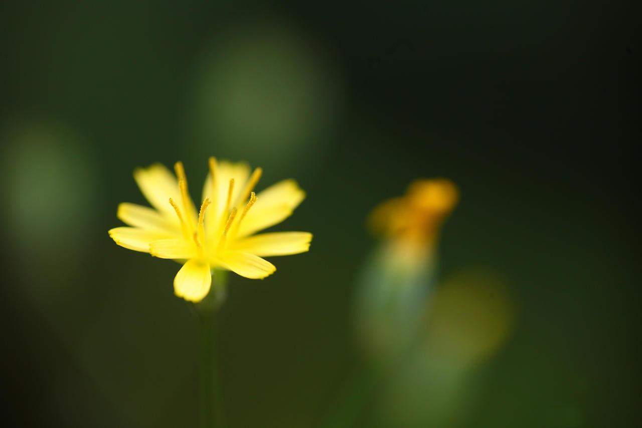 Yellow by luka567