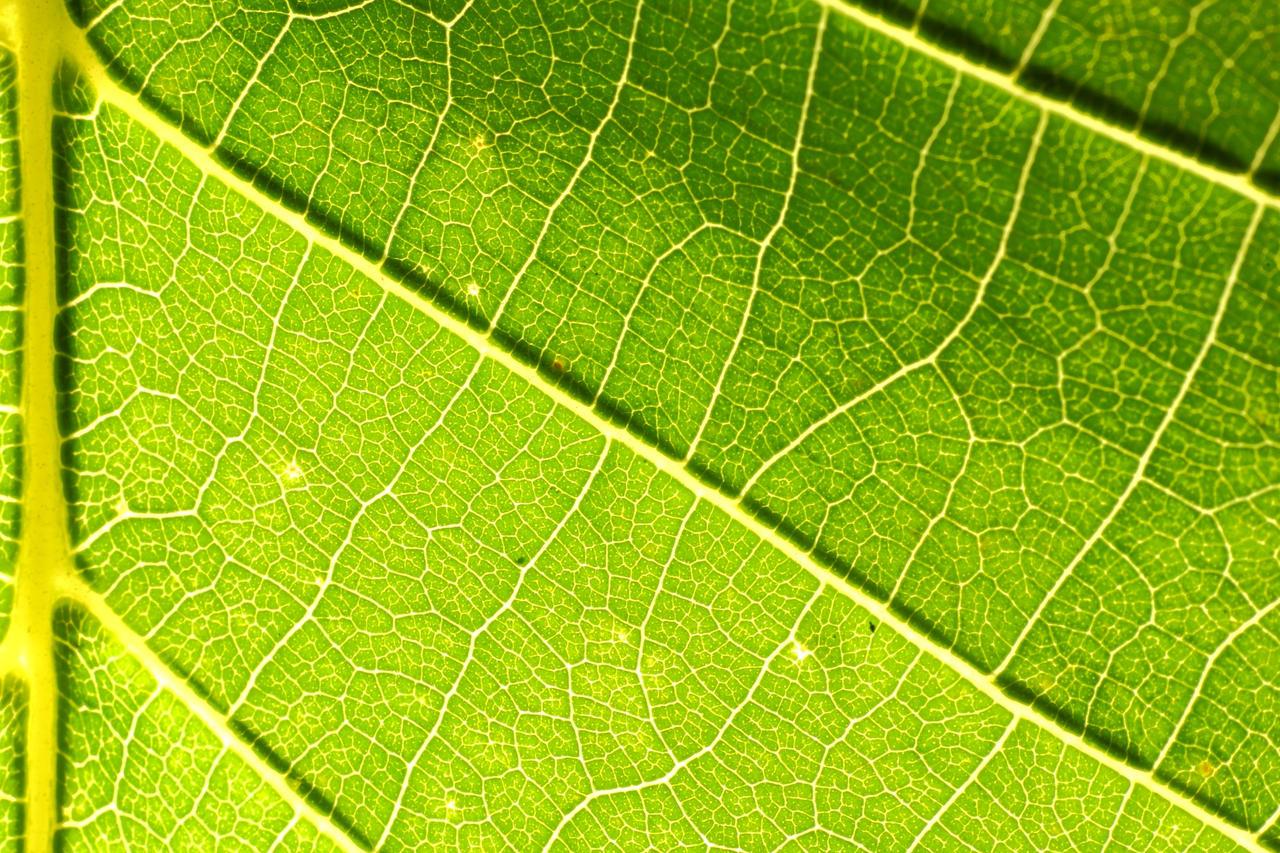 Green leaf by luka567