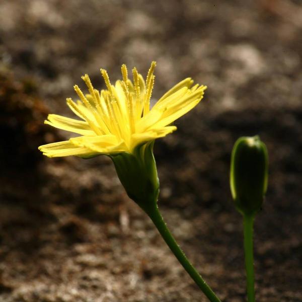 Yellow II by luka567