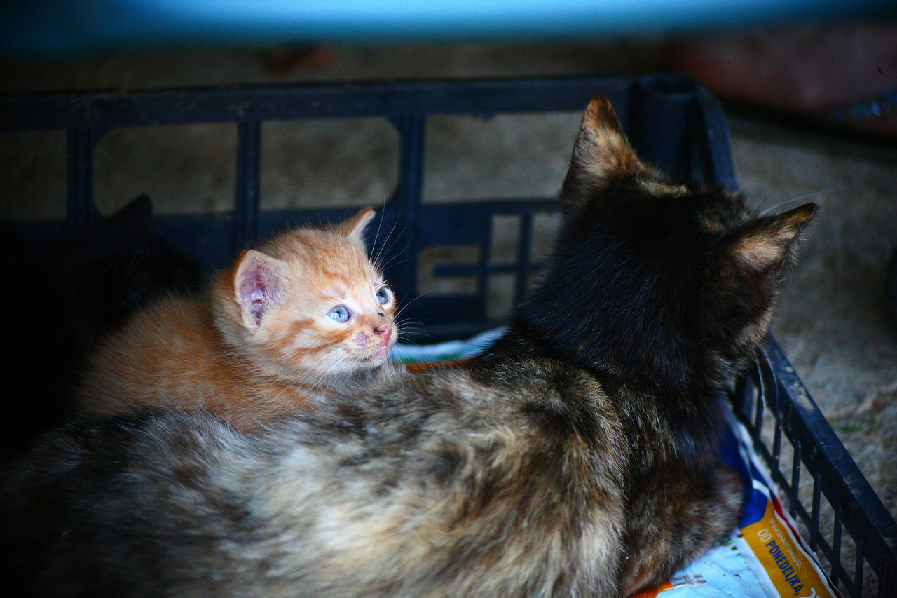 A small kitten by luka567