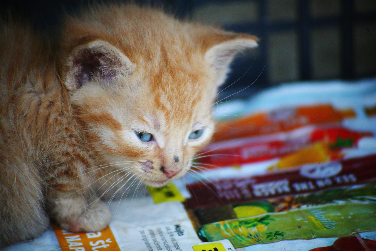 A small kitten II by luka567