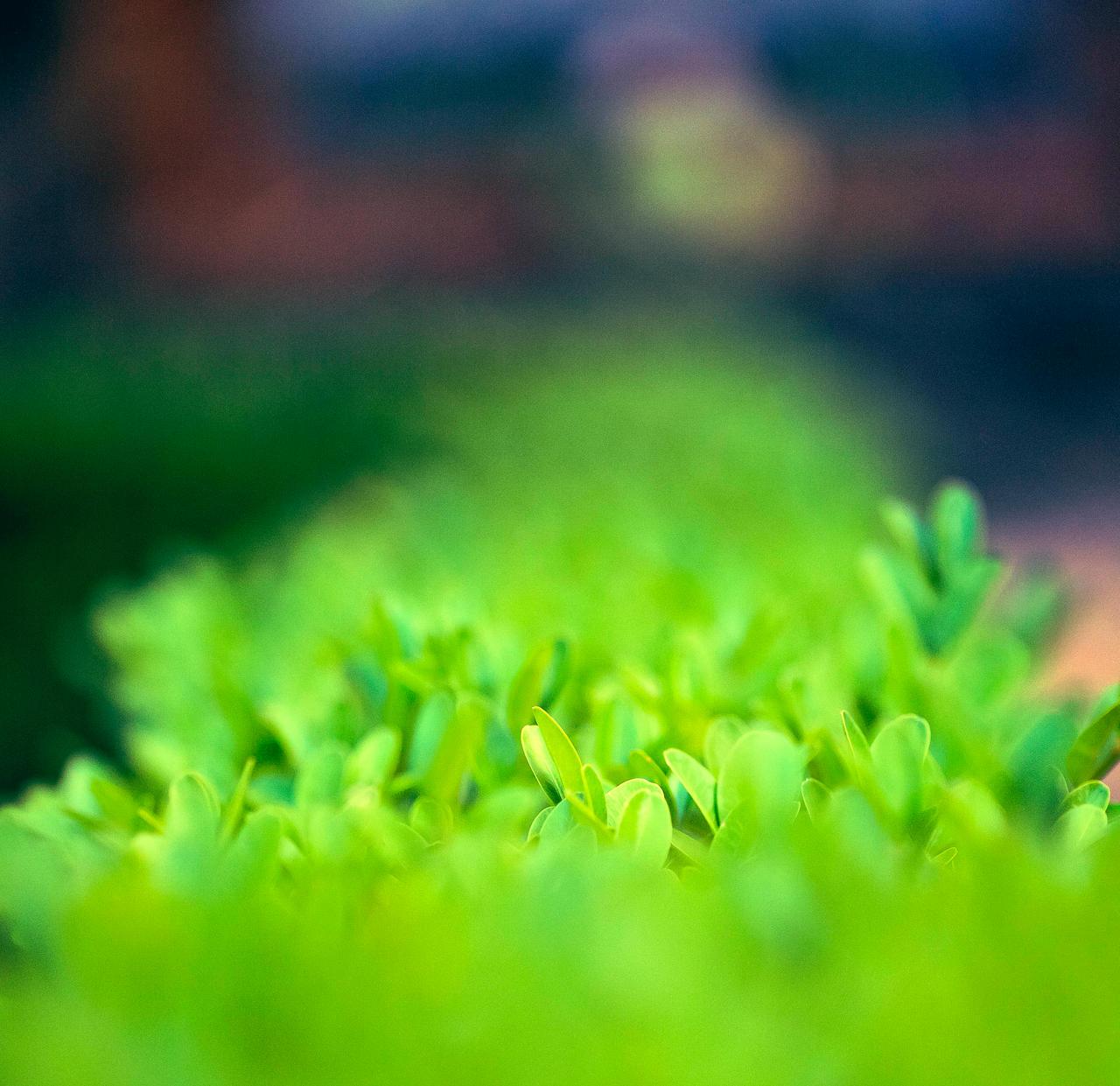 Veggies by luka567