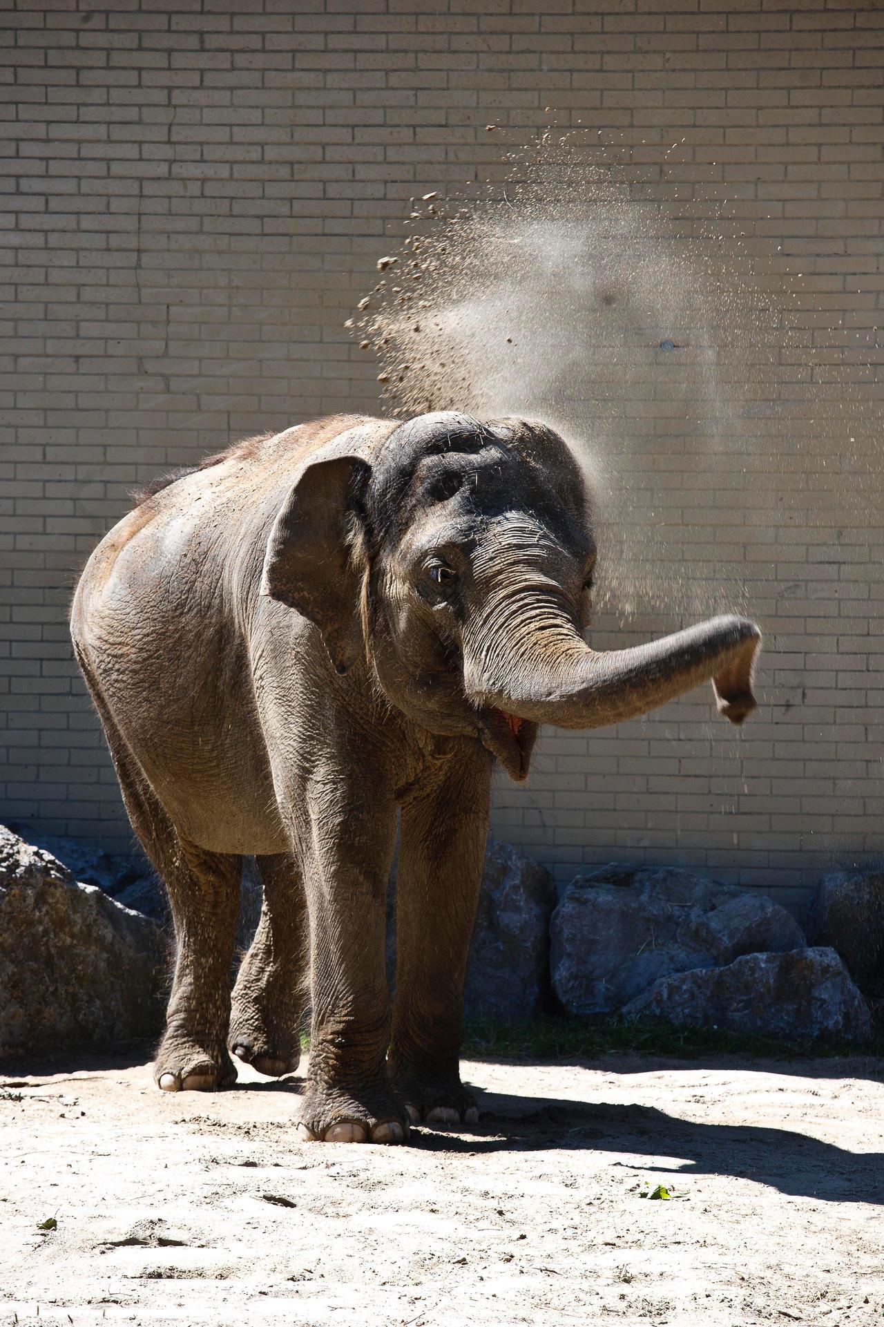 An elephant by luka567