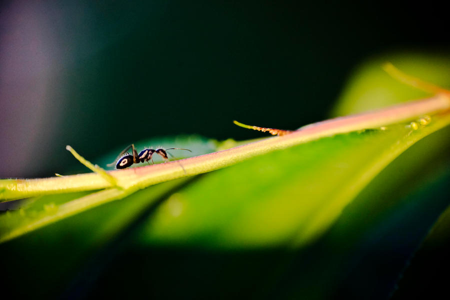 A lonesome ant by luka567