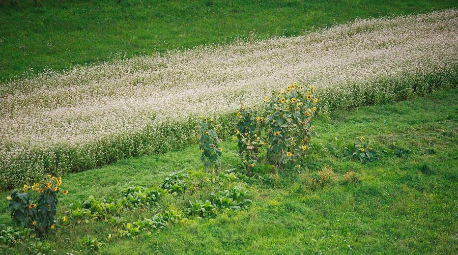 Field by luka567