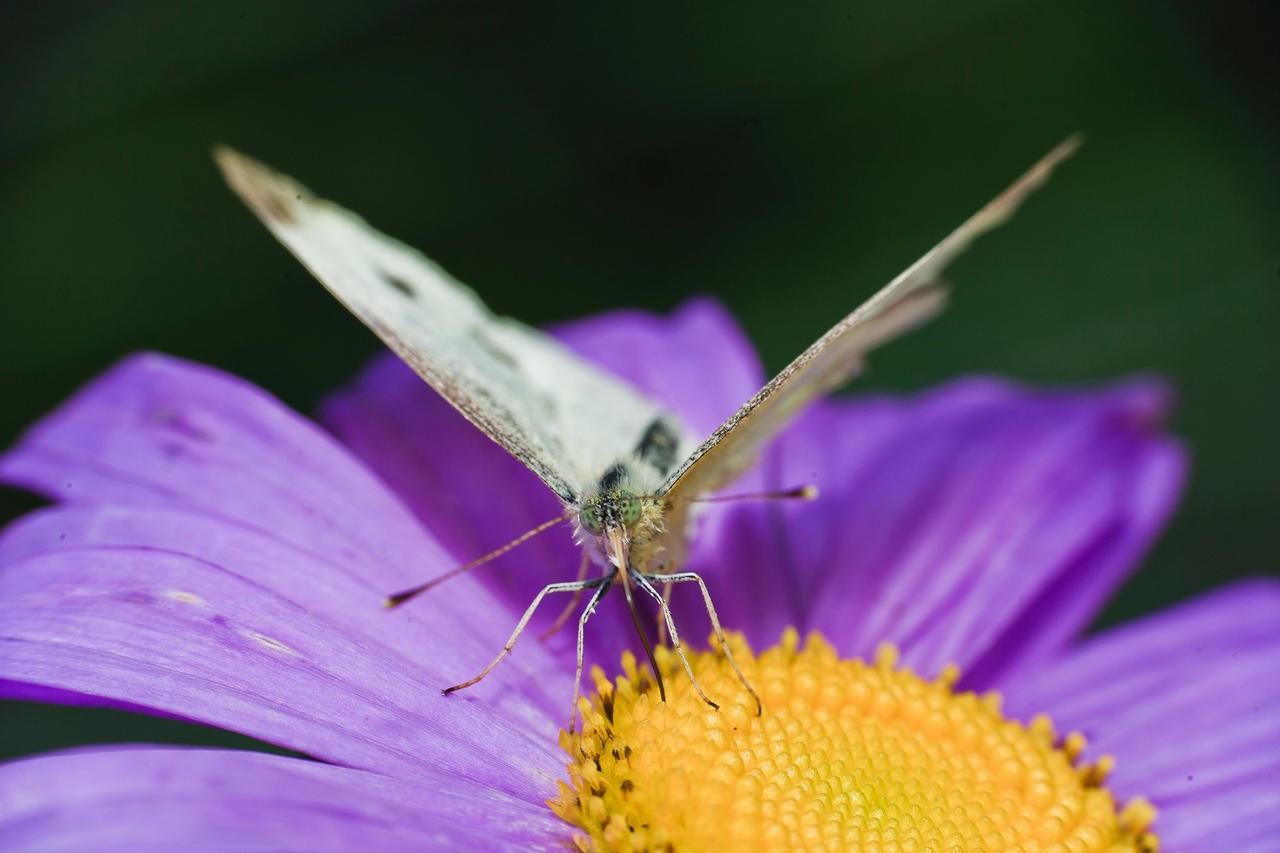 Butterfly by luka567