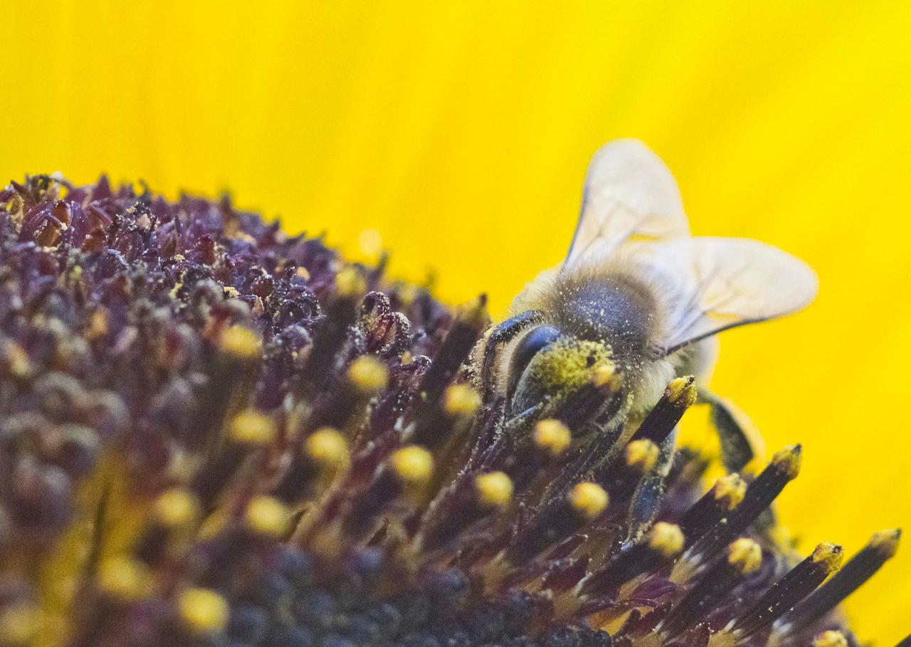 Honeybee II by luka567