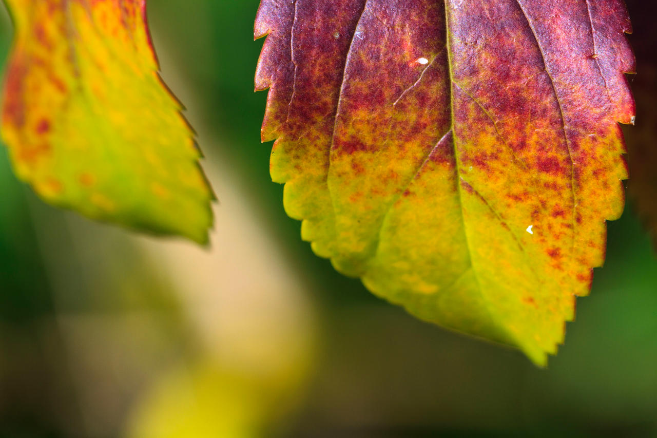 Colouring of leaves by luka567