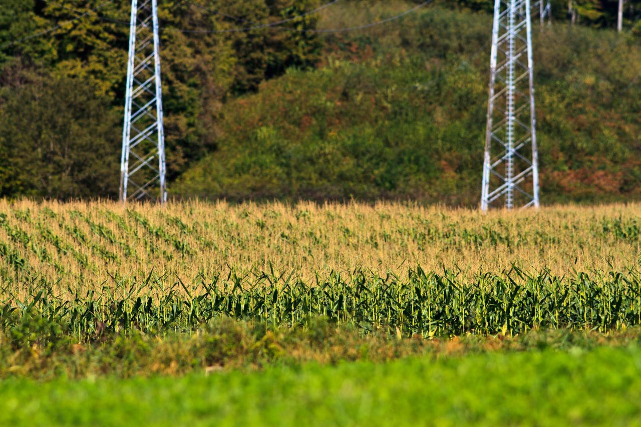 Field of corn by luka567