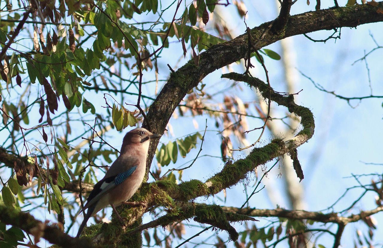 Blue eyed bird by luka567