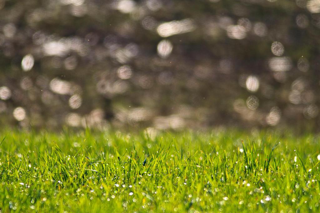 Grassy by luka567