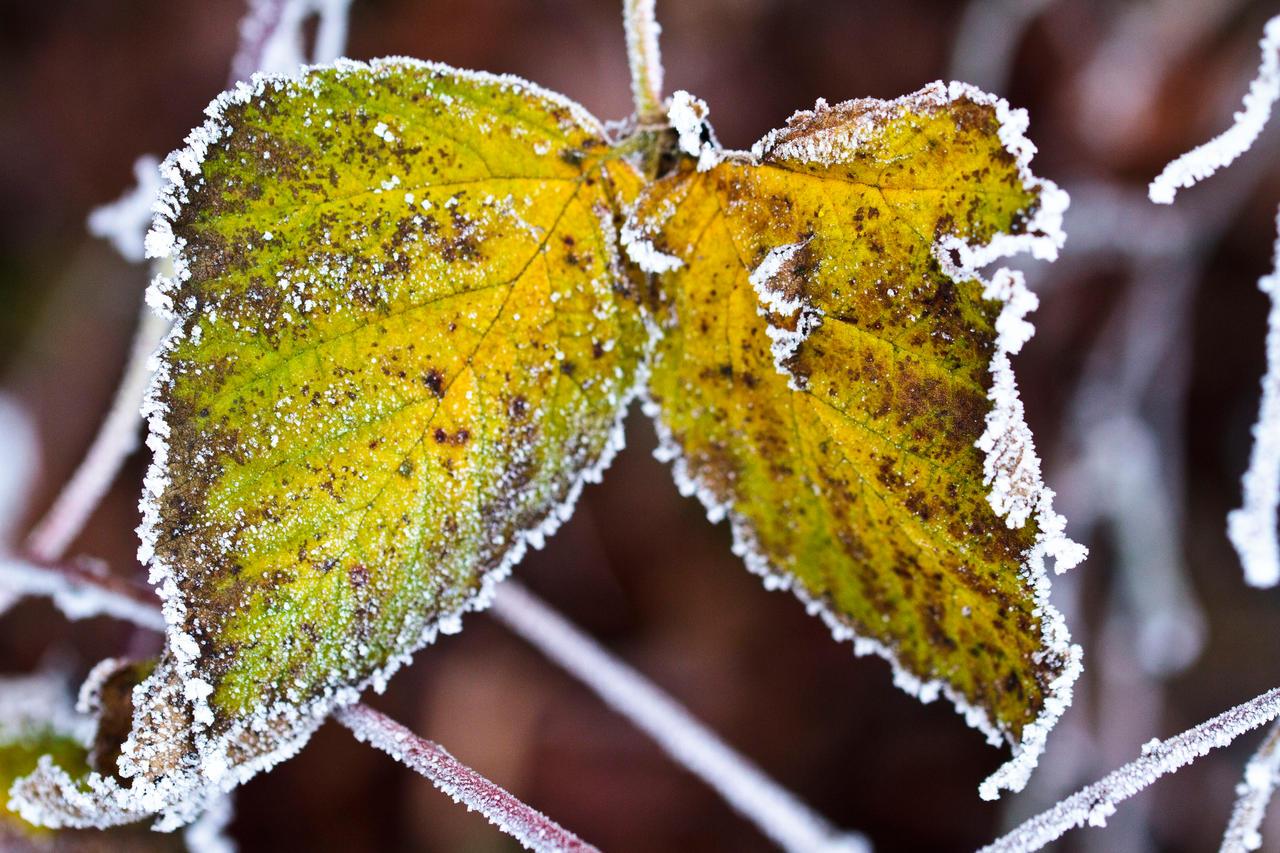 Frozen Butterfly by luka567