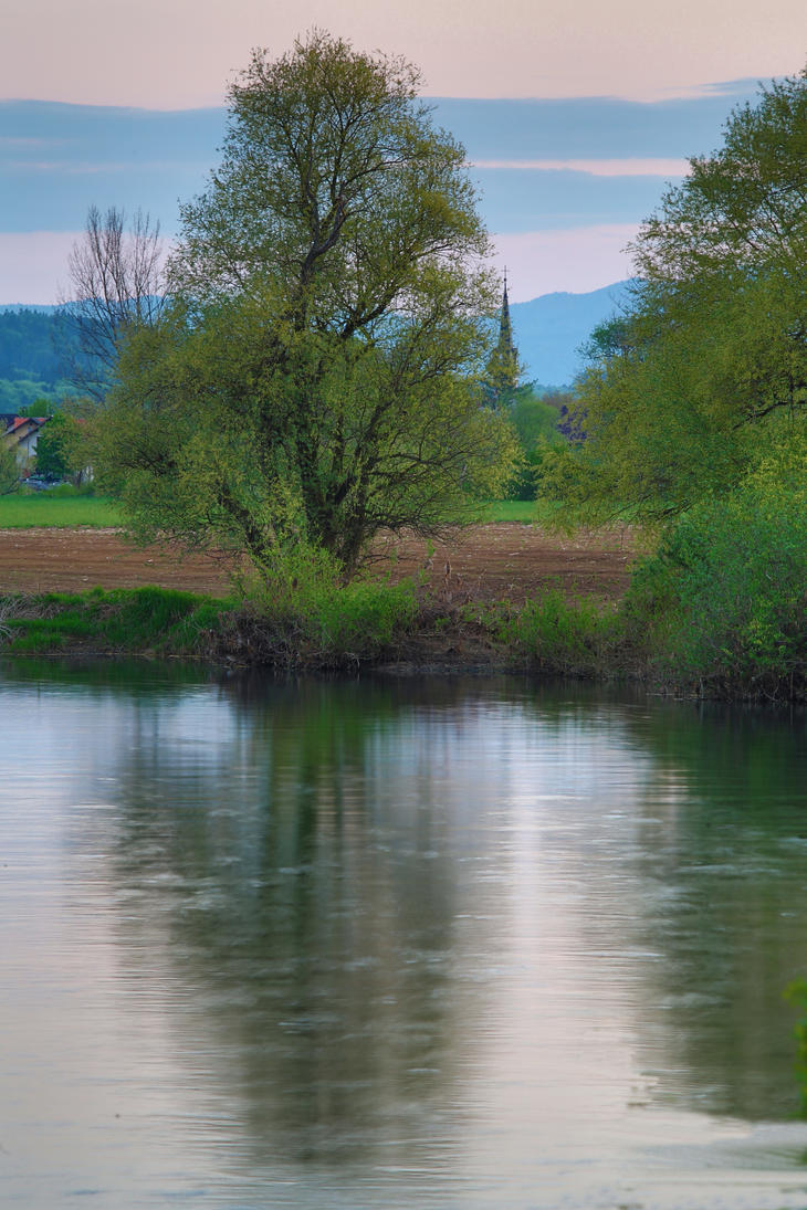 Tree at the riverside by luka567