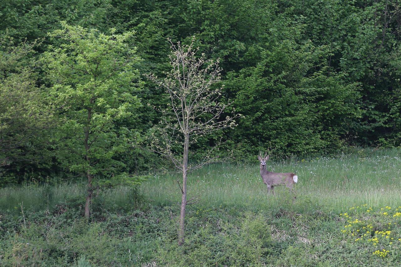 Deer by luka567