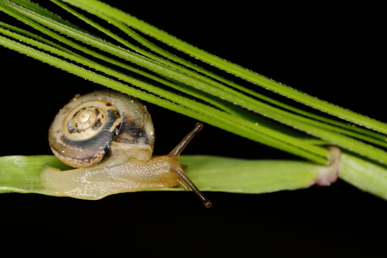 Snail on a grass by luka567