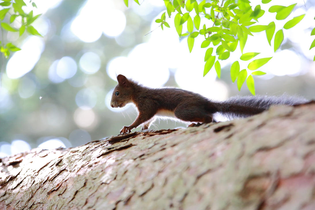 Young squirrel climbing on the tree by luka567