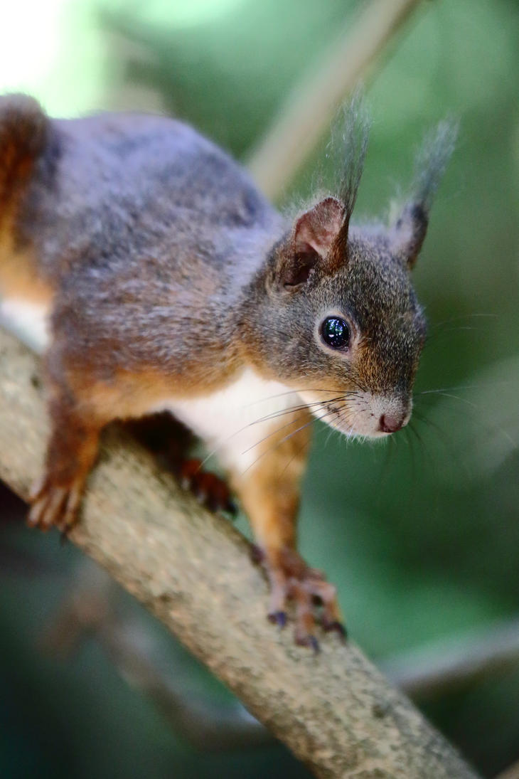 Squirrel on the branch by luka567