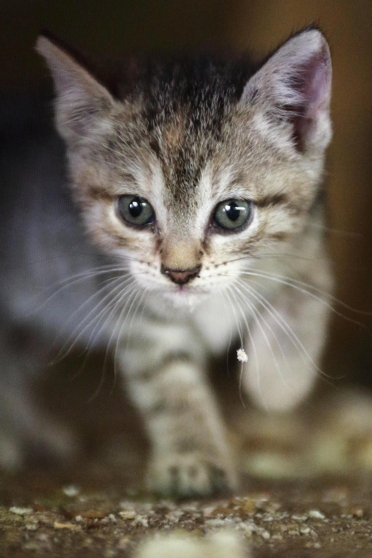 Kitten by luka567