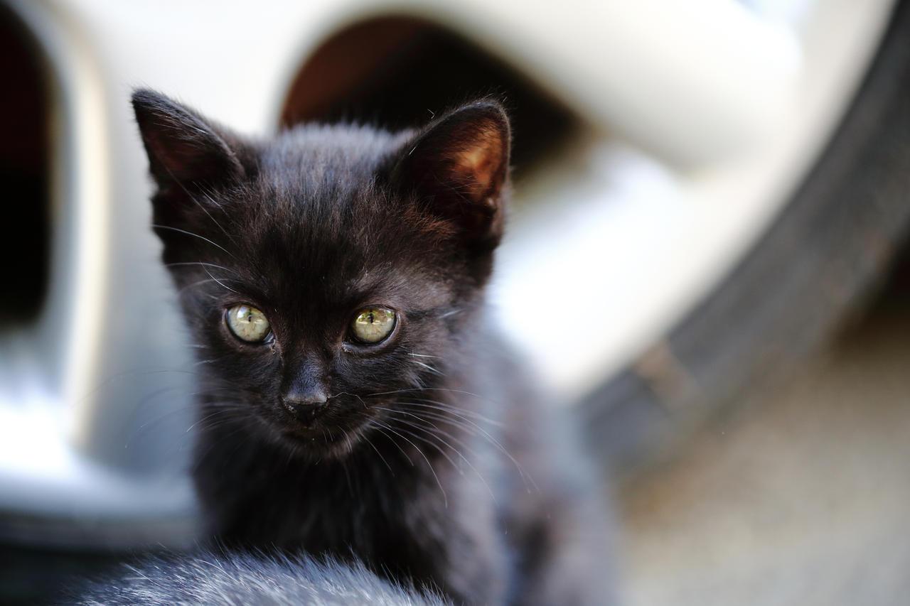 Black kitten by luka567