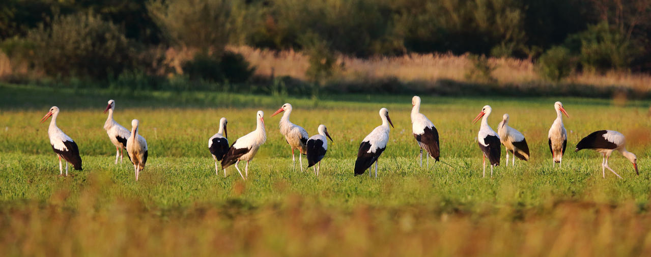 Theme of the day - maany storks by luka567