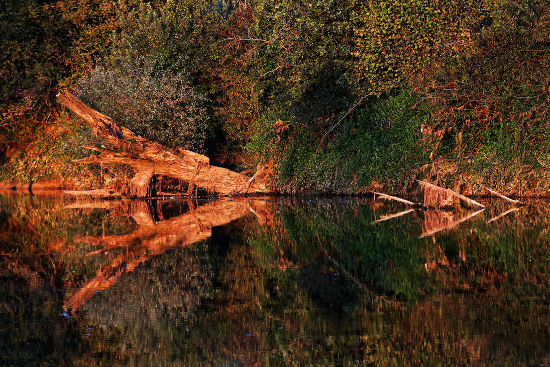 Reflections on the river Krka by luka567