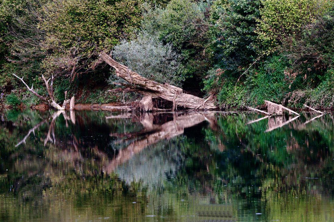 Reflections by luka567
