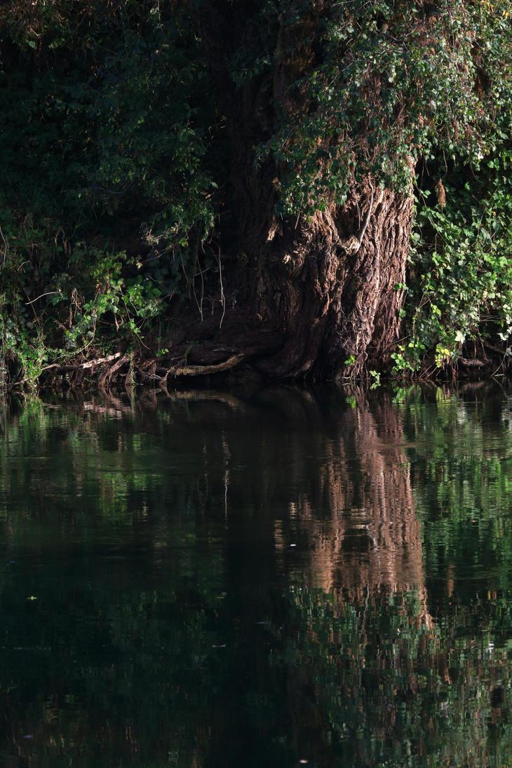 Tree reflection by luka567