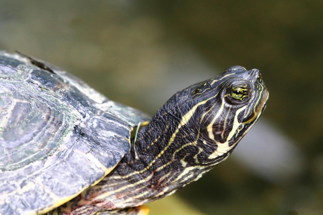 Portrait of a turtle by luka567
