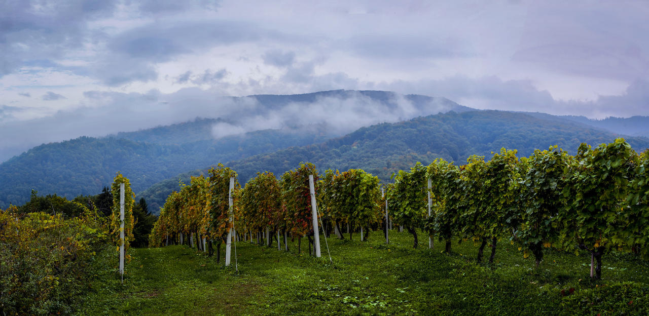 Panoramic view - Gorjanci by luka567