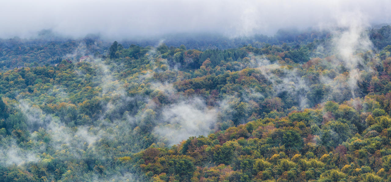 Foggy forestscape by luka567