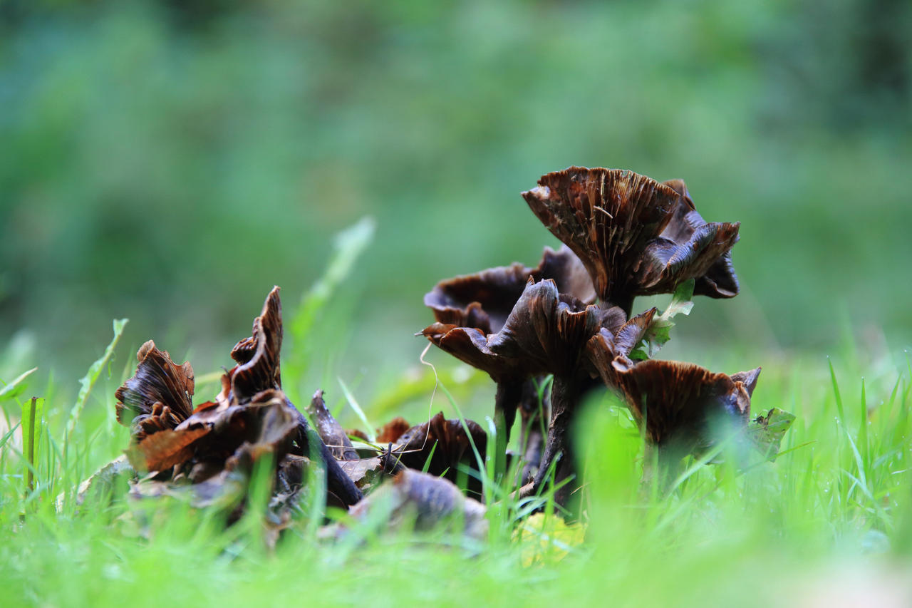 Fungi by luka567