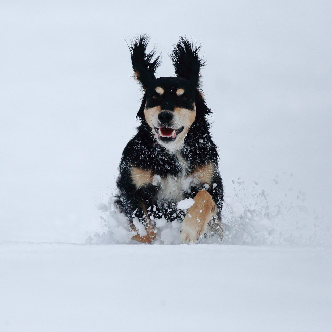 Timi in the snow by luka567