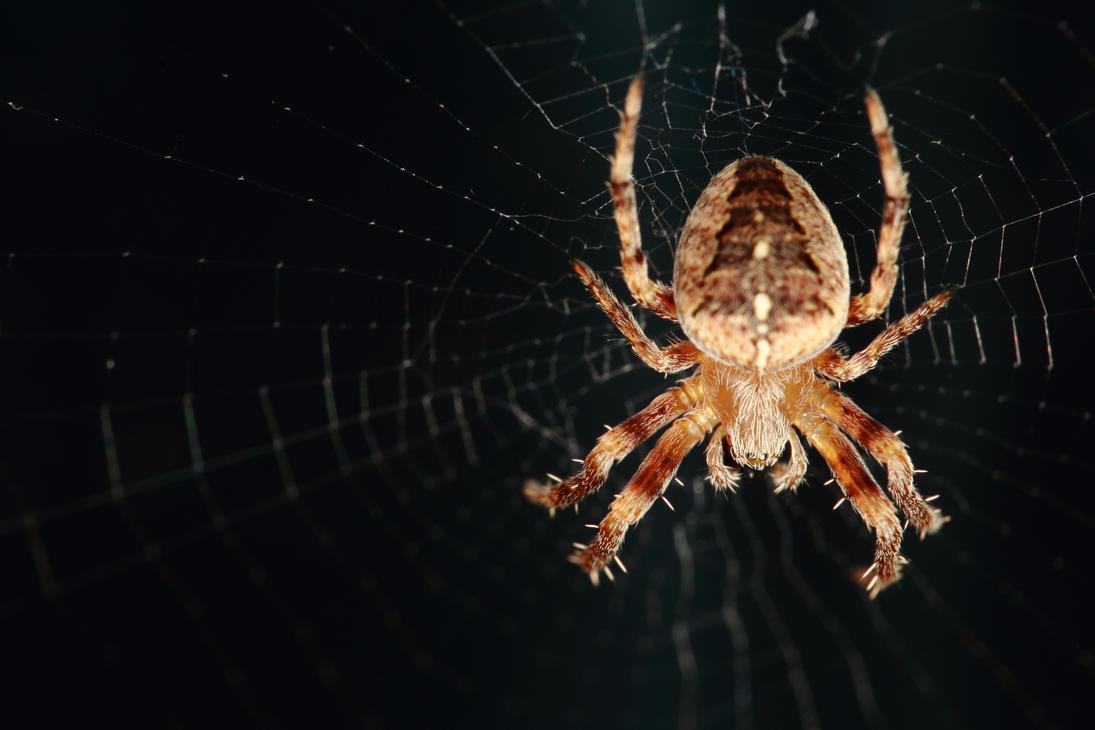 Spider by luka567